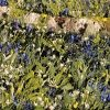 Fallen Birch I - Mark Eldred for Kilbaha Gallery