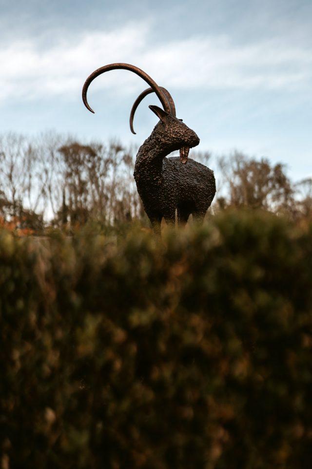 Bronze Goat by Donnacha Cahill for Kilbaha Gallery Buy Irish Art online